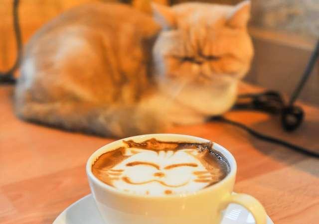 Kedi severken kahve içmek mi?