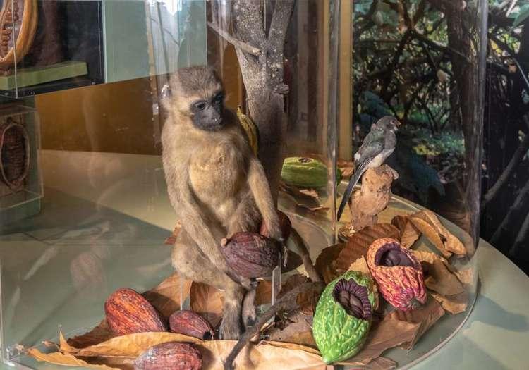 Çikolata Müzesi – Belçika