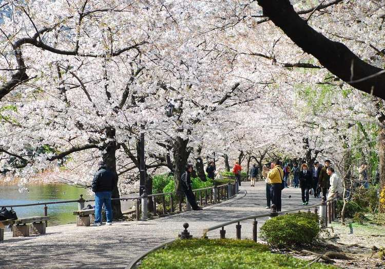 Ueno Park, Tokyo