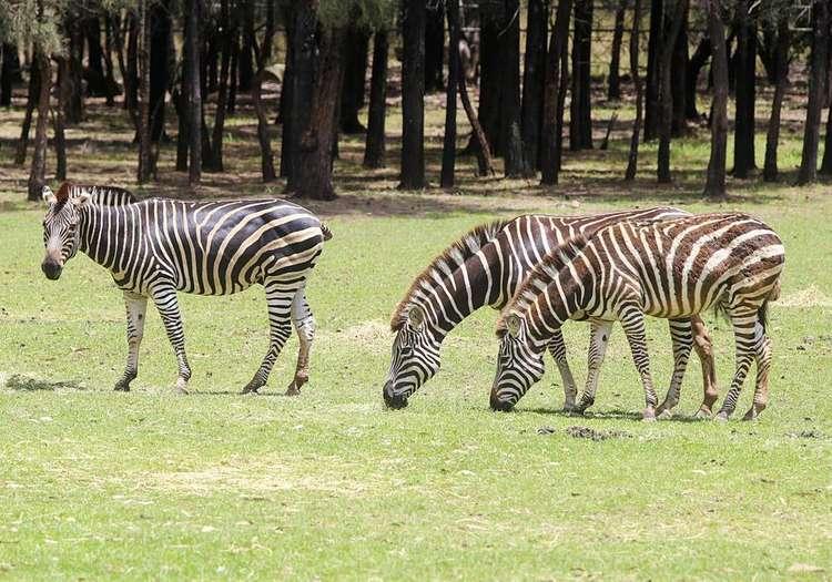Karaganda Hayvanat Bahçesi