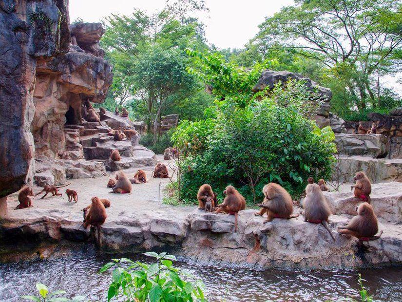 7- Macera dolu gece safarisi