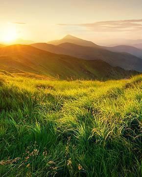 Die Wunder der Natur