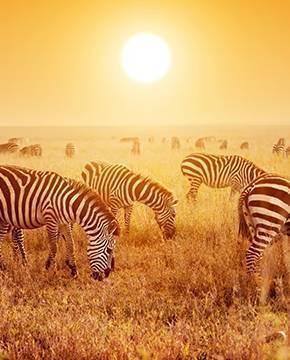 İstikamet: Vahşi Doğa